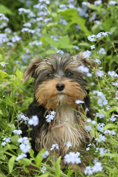 Dog Trainers West Palm Beach Florida