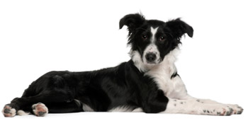 dog trainers, dog training services