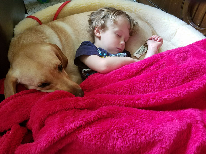 Autism Service Dog, Sage helping Emmet with his autism.